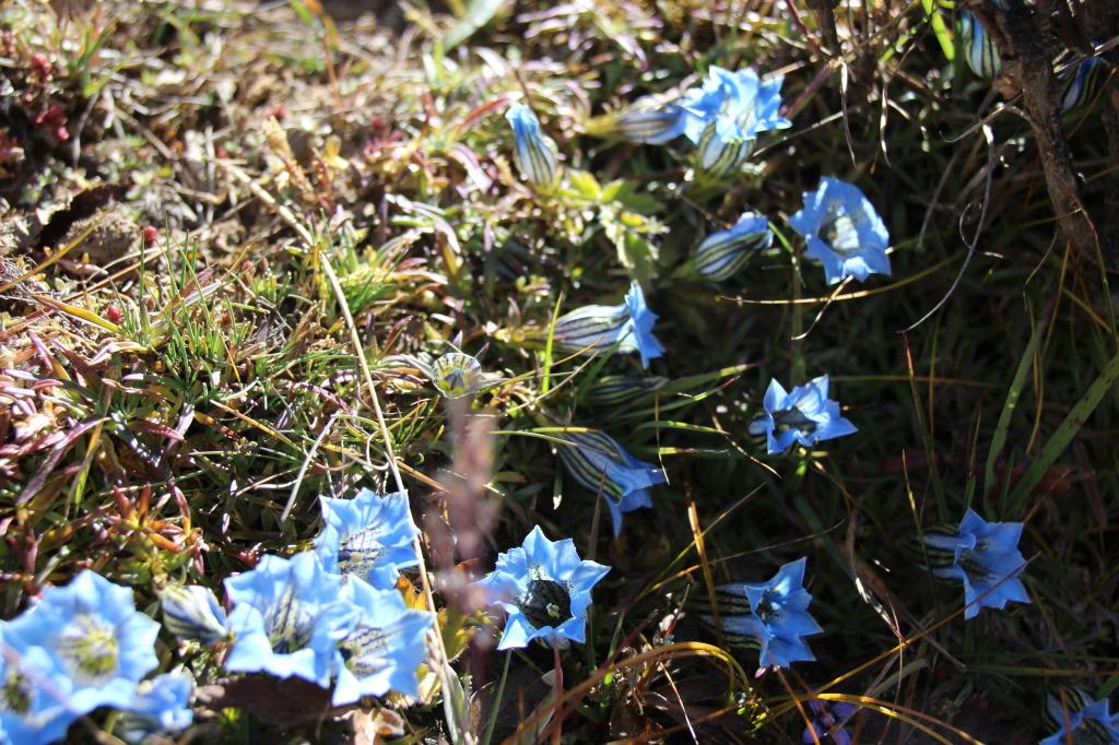 Blue Ground Flowers