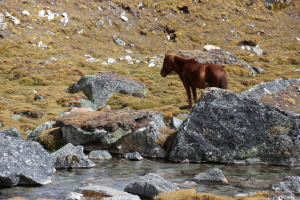 Horse By Stream