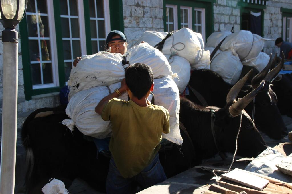Porters Loading the Yaks