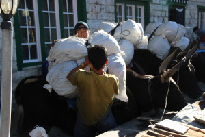 Porters Loading the Yaks