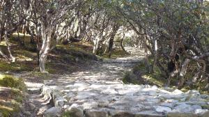Trail fromTengbocke Monastery