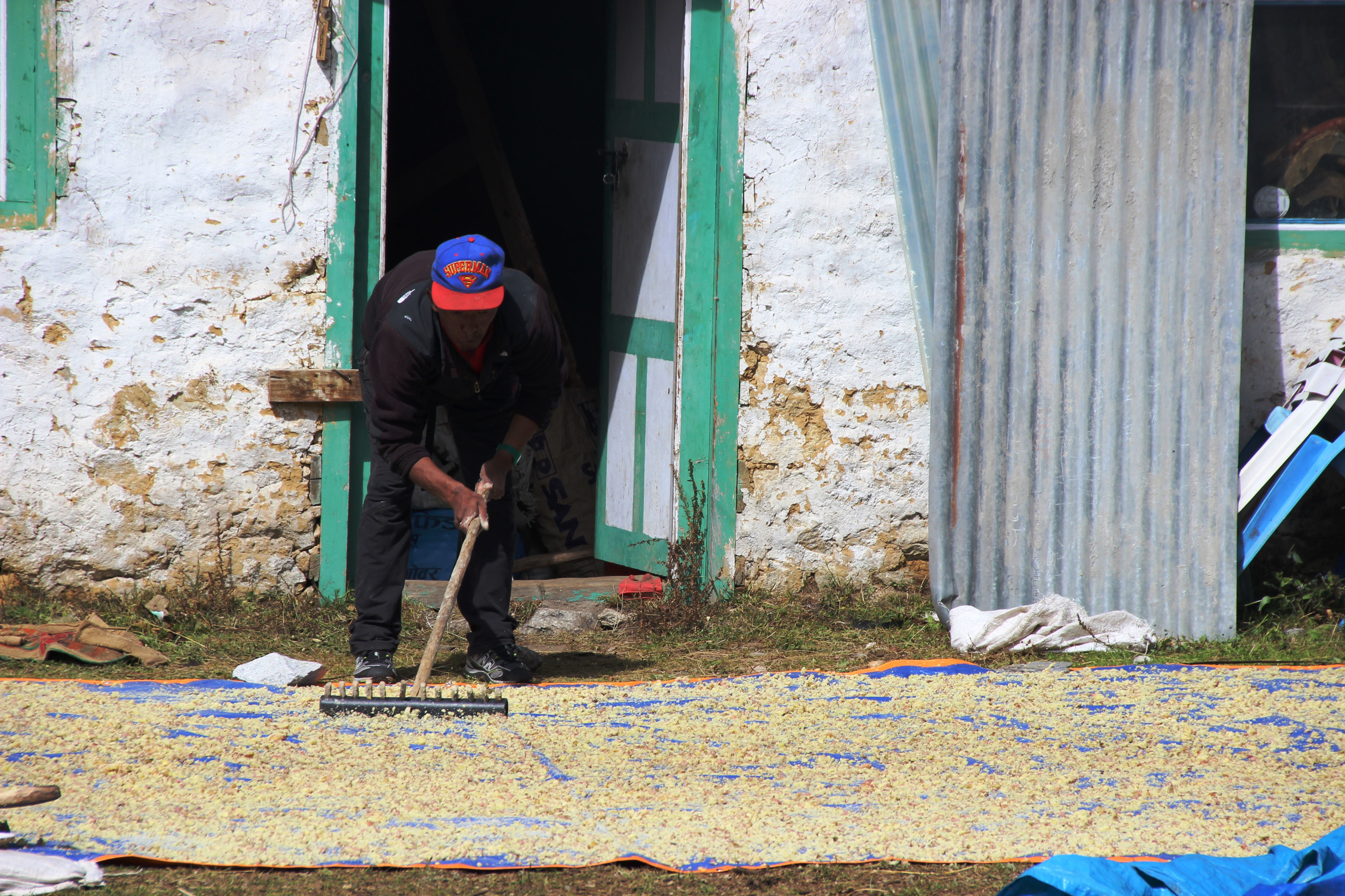 Villager Drying Potatoes