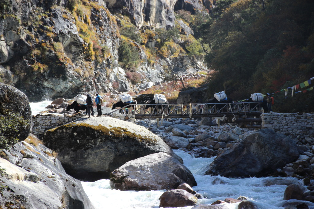 Yaks Crossing Bridge (1)