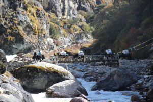 Yaks Crossing Bridge (6)