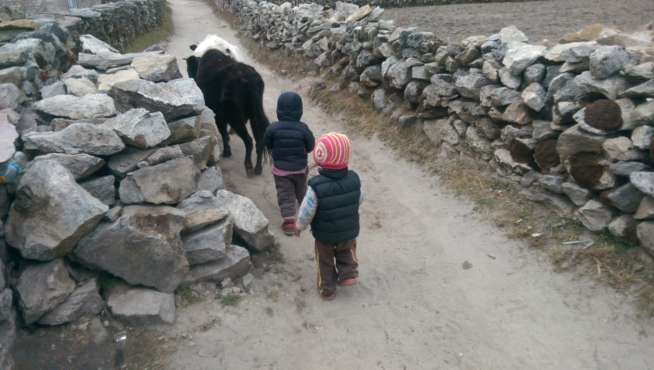 Young Yak Herders