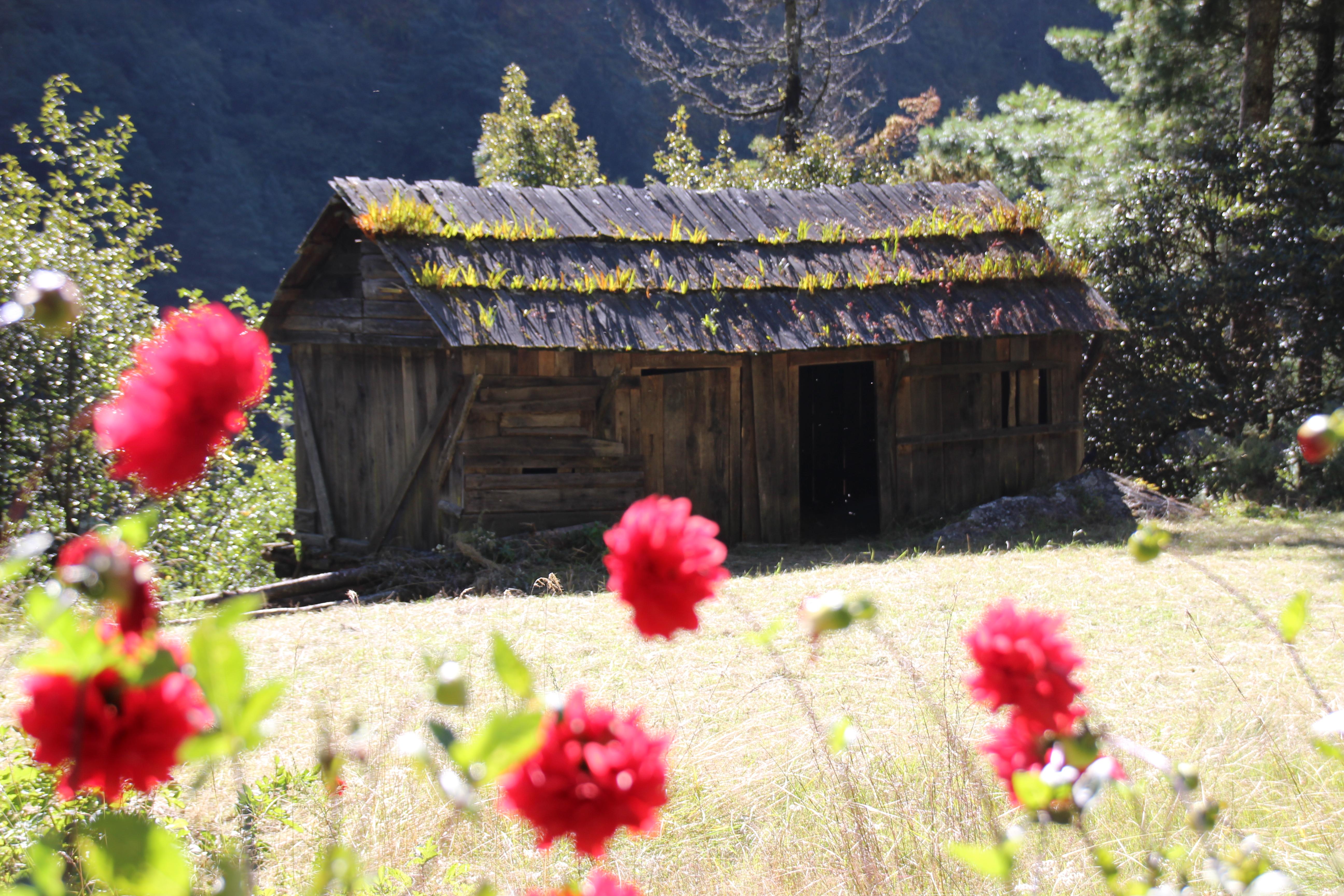 Old Local Farm House - Flowers